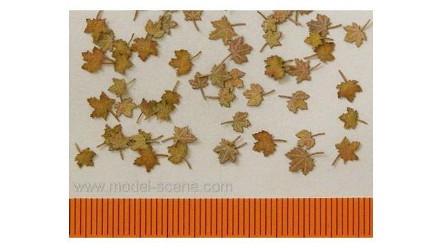 Maple - Extra colours, autumn