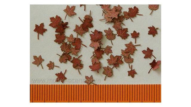 Maple - dry leaves