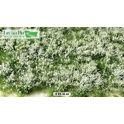 Bloemen wit, 15 x 21 cm