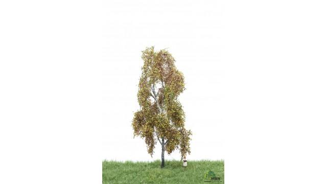 Berk, 18-22 cm, herfst, geschikt voor H0